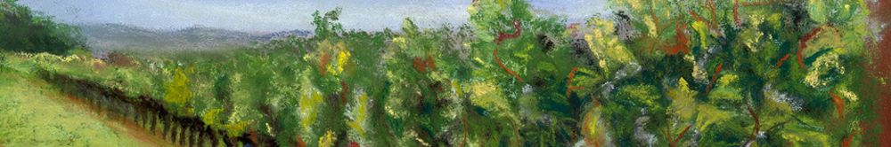 Vineyard banner image